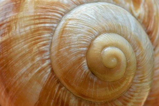 Snail, Shell, Schalenweichtiere, Spiral, Housing, Macro