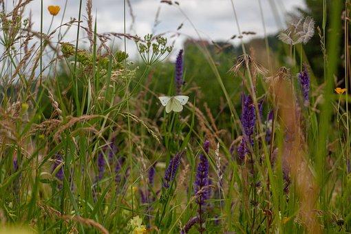 Wild Meadow, Meadow, Butterfly, Scrub, Colorful
