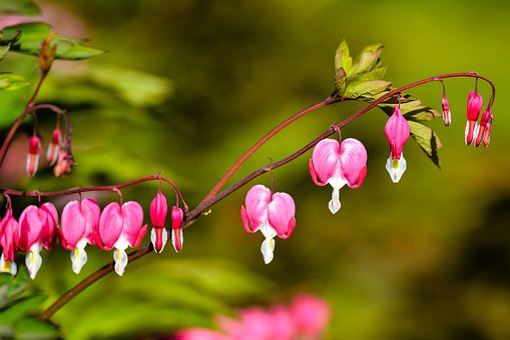 Flowers, Nature, Bloom, Spring, Blossom, Garden, Floral