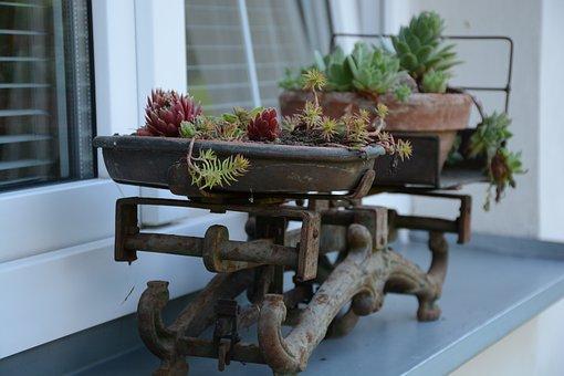 Netřesk, Weight, Garden, Scales, Rock Plants, Nature