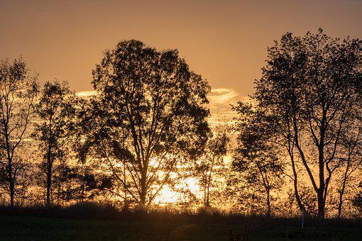 Trees, Night, Sunset, Orange, Horizon, Evening