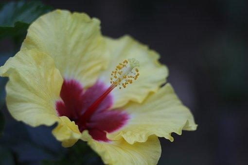 Flower, Yellow, Yellow Flower, Nature, Garden, Petals