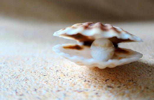 Shell, The Beach Pearl, Beach, Sand, Seashell, Sea