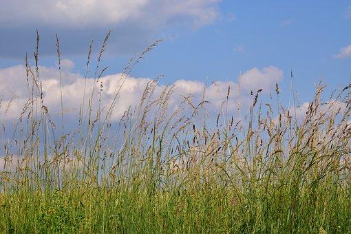 Meadow, Summer Meadow, Grass, Green, Sky, Clouds, Blue