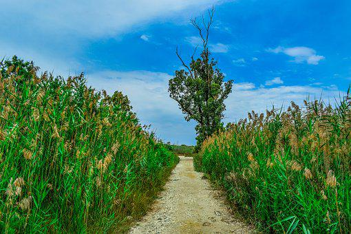 Swamp, Path, Tree, Reeds, Nature, Sky, Clouds