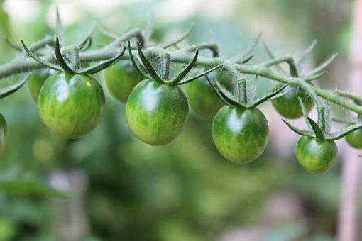 Tomatoes, Fried Green Tomatoes, Vegetables, Food