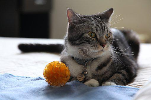 Kitten, Toy, Cat, Play, Funny, Blanket, Close, Tabby
