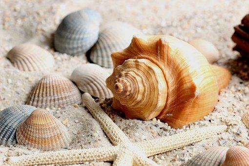 Sand, Water, Close, Shell, Mussels, Shellfish