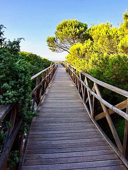 Wooden Bridge, Web, Pine, Architecture, Hike, Away