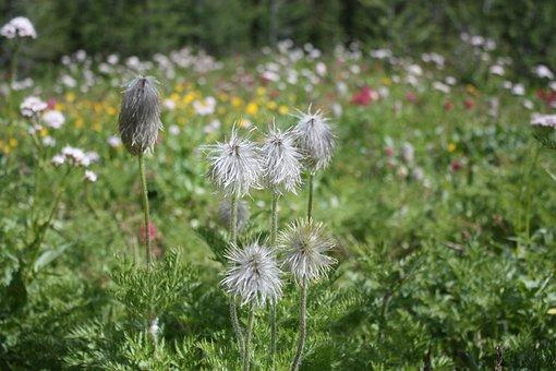 Flower, Wildflower, Spring, Meadow, Nature