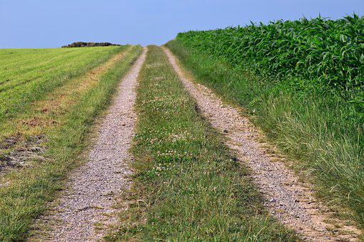 Away, Lane, Agriculture, Corn, Horizon, Target, Trail