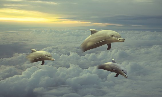 Clouds, Dolphins, Dolphin, Animal, Mammals