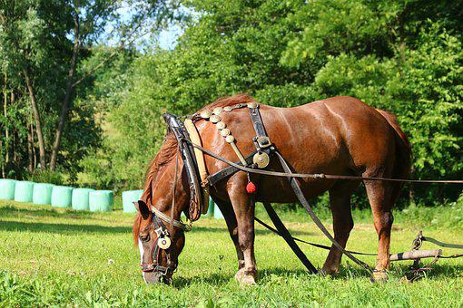 Horse, Animal, Harness, Plowing, Agriculture, Grass