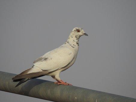 Saudi, Arabia, Bird, Animal, Nature, Wildlife, Life