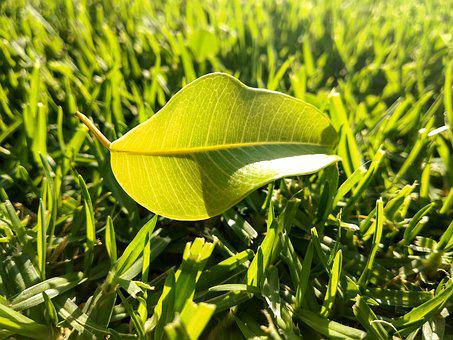 Leaf, Lawn, Green, Nature, Green Leaf, Background