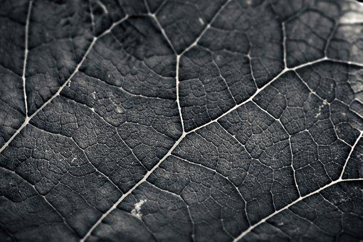 Leaf, Structure, Texture, Background, Nature, Pattern