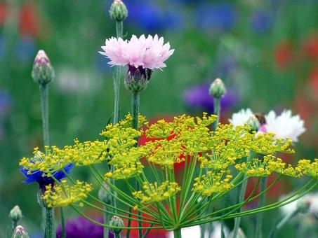 Flowers, Massif, Petals, Botanical Garden