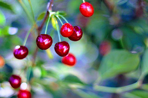 Cherry, Cherries, Closeup, Nature, Vitamin, Fruit