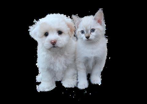 Dog And Cat Free, Pet, Cat, Isolated, Animal, Dog