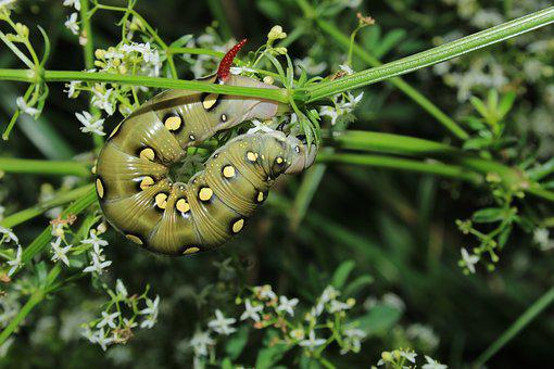 Caterpillar, Macro, Nature, Green, Closeup, Flower