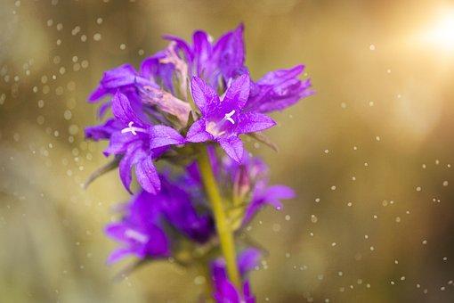 Flower, Blossom, Bloom, Purple, Purple Flower, Nature