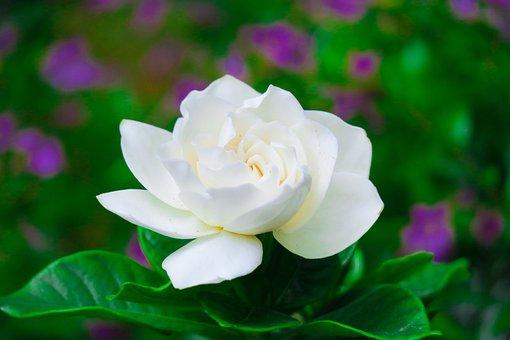 Flowering, Plant, Summer, Natural, Flower, Petal, Xie