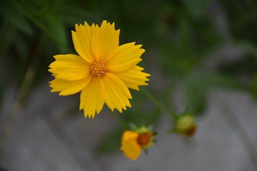 Flower, Small Yellow Flowers, Summer