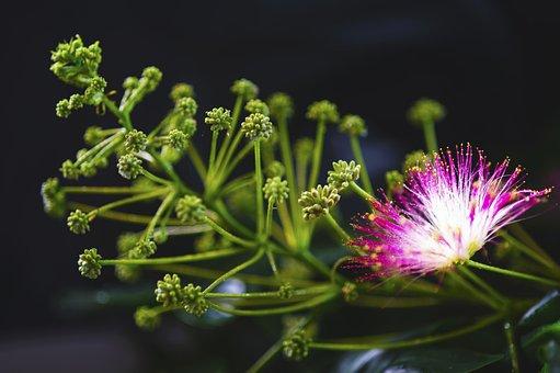 Flowers, Summer Flowers, Spoor Flowers, Nature