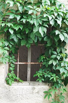 The Old House, Window, Foliage, Climbing