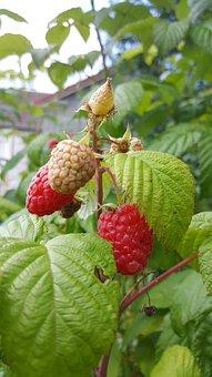 Fruit, Food, Leaf, In Good Health, Nature, Bay, Health