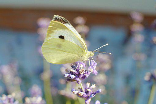 Butterfly, Close, Nature, Insect, Macro, Summer