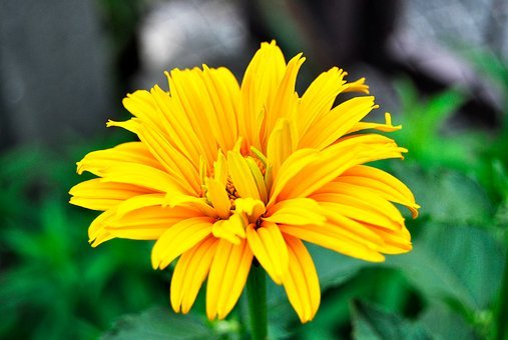 Yellow, Jellow, Healthy, Yellow Flower, Garden