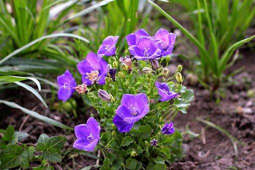 Flowers, Ringtones, Garden, June, Mountains, Nature