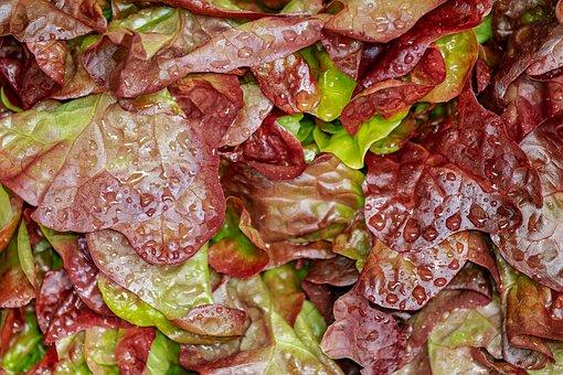 Lollo Rosso, Cut Salad, Salad, Crisp, Fresh, Washed
