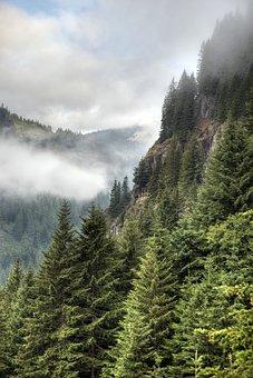 Stevens Canyon, Early, Morning, Fog, Mt Rainier, Hiking