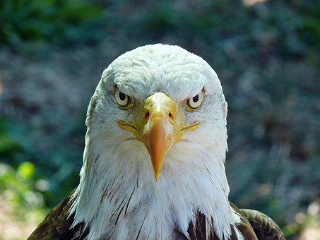 Aquila, Birds, Nature, Austerity