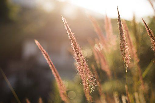 Flower, Grass, Blur, Background, Nature, Environment