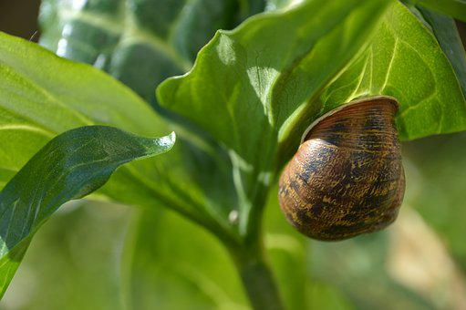 Nature, Green, Snail, Leaf, Fauna And Flora, Plant