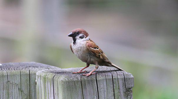 Sparrow, Birds, Outdoors, Park, New, Cuteness