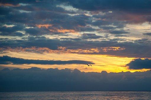 Sunrise, Seagull, Golden, Sky, Flying, Birds, Ocean
