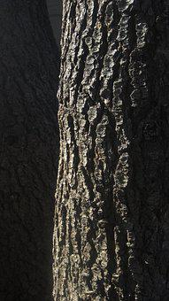 Tree, Pine, Bark, Wood, Outside, Dark, Brown, Evergreen