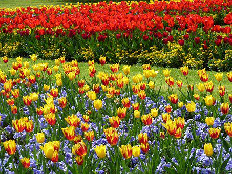 Park, Tulips, Tulip Field, Garden, Meadow, Colorful