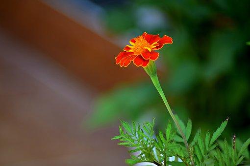 Summer Flower, Flower Flower, Nature, Flower, Perennial