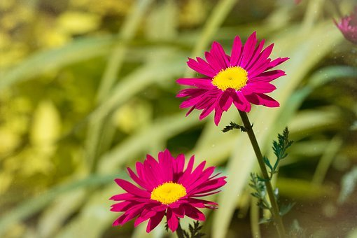 Flowers, Pink, Red, Pink Flowers, Red Flowers, Garden