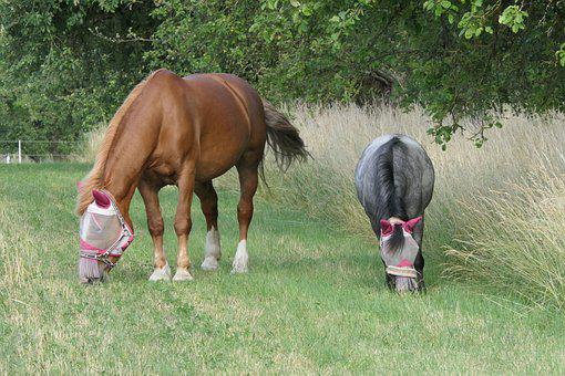Horse, Pony, Pasture, Meadow, Animal, Nature