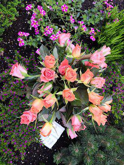 Roses, Flowers, Pink, Rose Blooms, Garden
