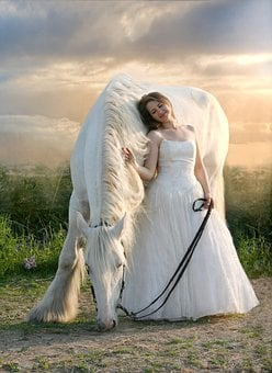 Shire, Horse, Equine, White Horse, Draft, White Dress