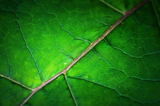 Leaf, Structure, Texture, Green, Background, Nature