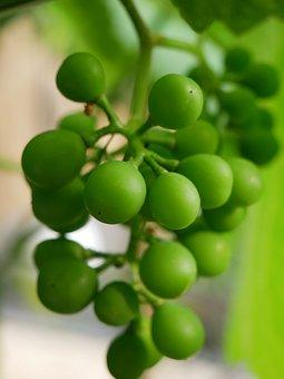 Grapes, Green, Green Grapes, Eat, Food, Nature, Vine