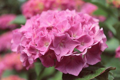 Flower, Wallpaper, Spring, Pink, Nature Wallpaper